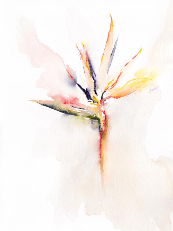 Bird of Paradise by Zuzana Edwards, minimalist watercolour painting, 11 x 15 in (28 x 38 cm).