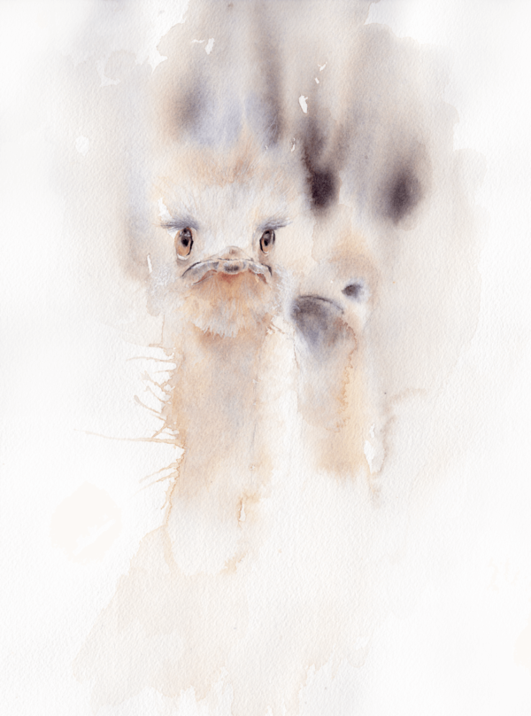 Conspiring by Zuzana Edwards, watercolour painting of ostriches, 9 x 12 inch (22.8 x 30.5 cm)