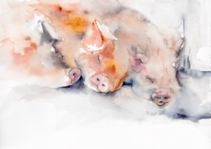 Dreaming of spuds by Zuzana Edwards, Pigs sleeping, whimsical watercolour painting