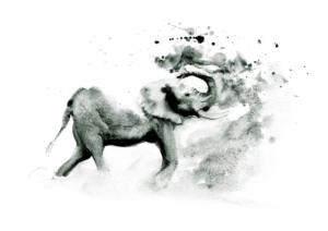 Elephant Bath by Zuzana Edwards, African animal monochrome fine art print 10.5 x 15 inch (27 x 38 cm).