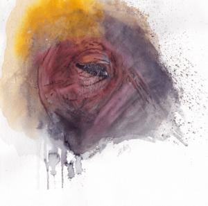 Heffalump's Eyelashes by Zuzana Edwards, Elephant Study, original watercolour painting 10.5 x 10.5 inch (26.5 x 26.5 cm).