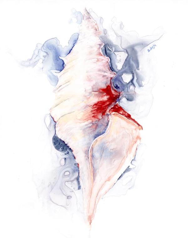 Tornado Seashell by Zuzana Edwards, original watercolour on yupo, 11 x 14 inch (28 x 36 cm)
