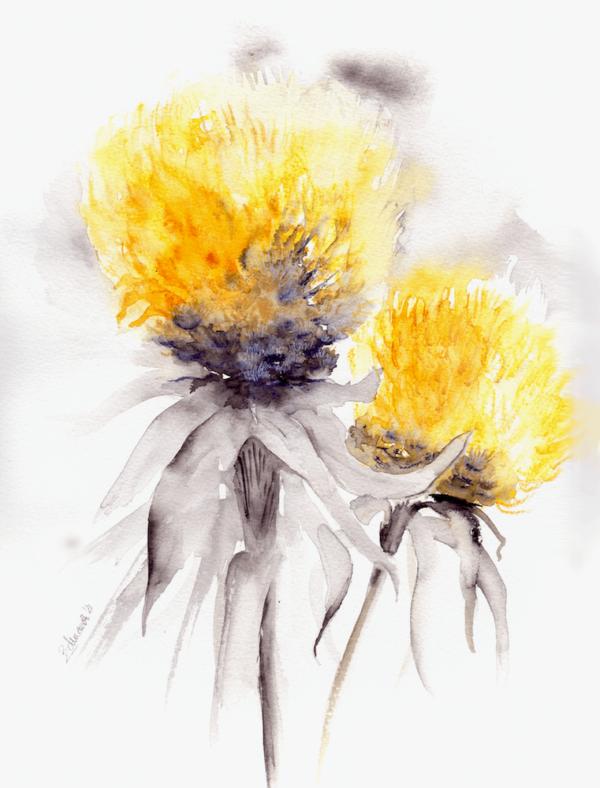 Billy - Lemon Fluff by Zuzana Edwards, Floral contemporary watercolour art 11.5 x 13.5 (28.5 x 35 cm).